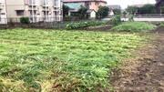 水戸市 S様 畑の草刈り