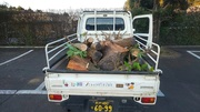 水戸市T様庭木伐採